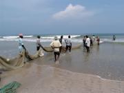 Bringing in the catch on Uppuveli Beach