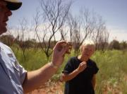 Examining the Thorny Devil