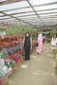 Flower Nurseries in Camerons.