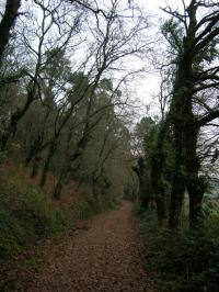Nature in the Camino de Santiago