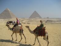 Camels at Giza - Cliche but....