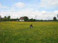 Fields of Kojakovice